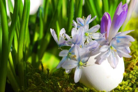 Eggshell with floral table decorations Stock Photo