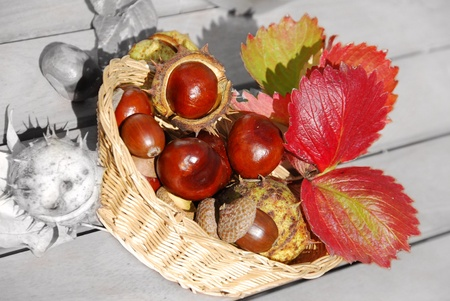craft material tinker: Table decoration with chestnuts Stock Photo