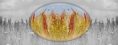 webbanner: Undeveloped meadow nature  Stock Photo