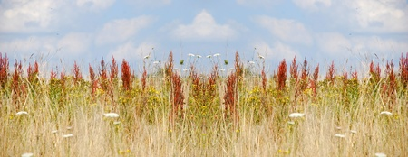 hideout: Undeveloped meadow nature  Stock Photo