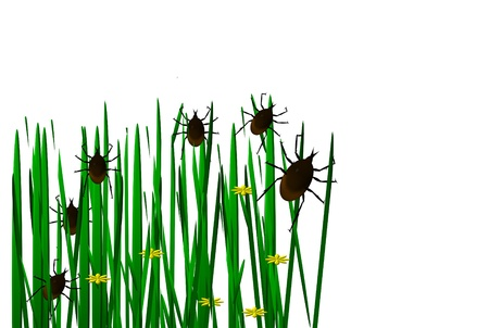 lurking: Ticks in the grass image  Stock Photo