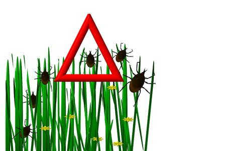 Ticks in the grass image  Stock Photo