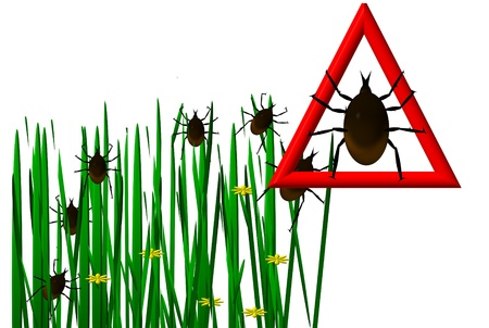 wood tick: Ticks in the grass image  Stock Photo