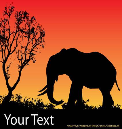 serengeti: Elephant Sunset