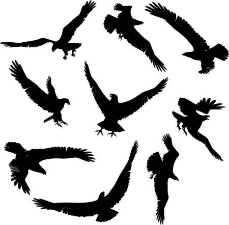 swoop: Eagle Siluetas Vectores