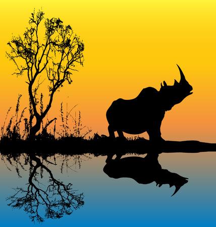 lake sunset: Rhinoceros Background