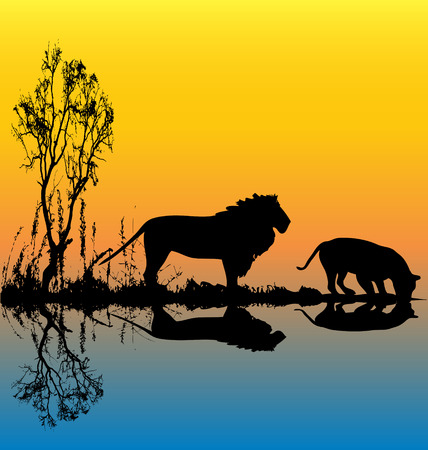 Lion Waterhole  Vector