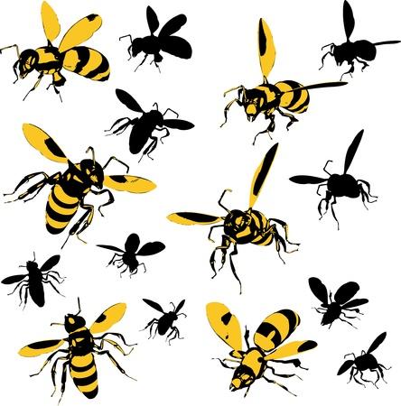buzzing: Wasps