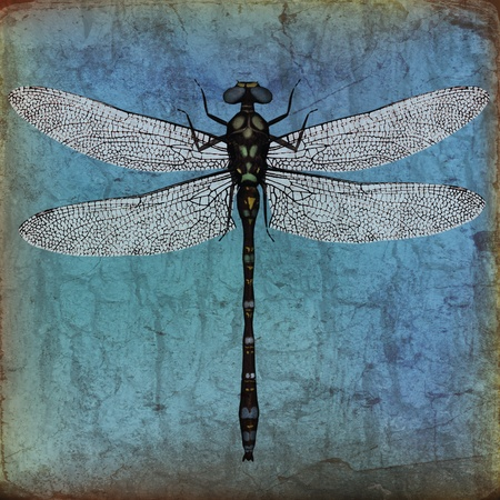 antiqued: Dragonfly Background