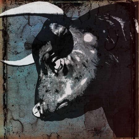 male bull: Bull Head Background  Stock Photo
