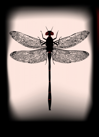 ghostly: Dragonfly illustration backlit with a ghostly halloween feel
