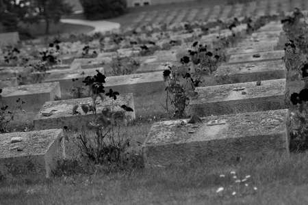 A depressive view of the roses growing in the gray graves in Theresienstand concentrated field.