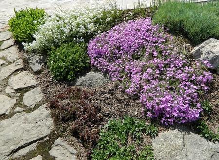 flowerbeds: Flowerbeds