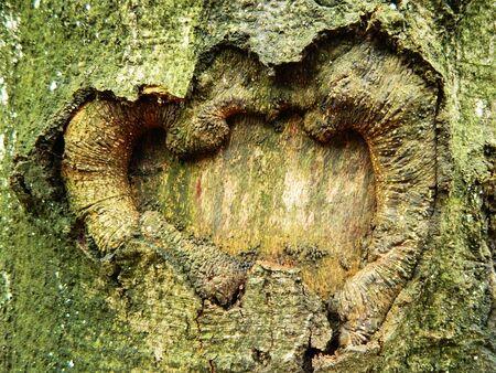 The textured bark Stock Photo - 16455768
