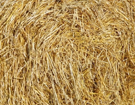 Texture of straw photo