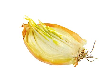 sprouted: Sprouted onions Stock Photo