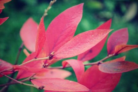 Red leave in autumn  Standard-Bild