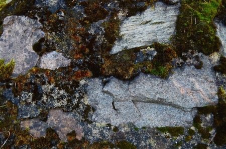 Texture of old stone wall covered green moss,