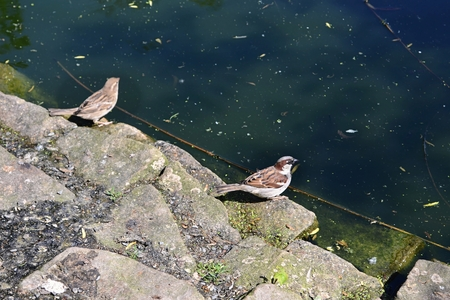 sparrow on the water