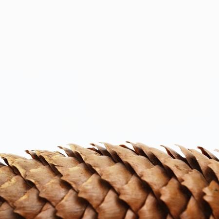 Pine cone on white  Standard-Bild
