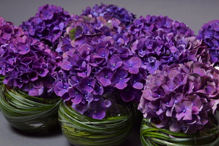 Beautiful violet hydrangea decoration with grass on gray background