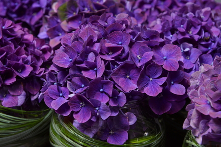 Beautiful violet hydrangea decoration with grass at glass