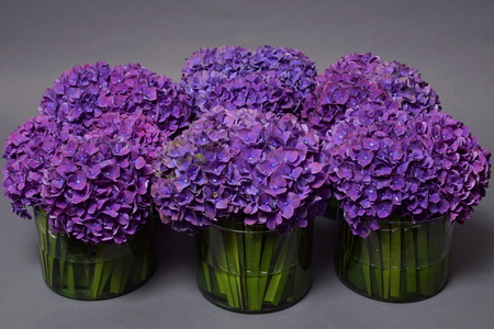 Beautiful flower decoration with violet hydrangeas and green grass in vase on gray background 스톡 콘텐츠