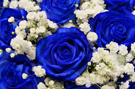 Beautiful decorative blue roses with white Gypsophila as wedding bouquet close up 스톡 콘텐츠