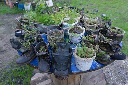 Plants inside old tracking boots