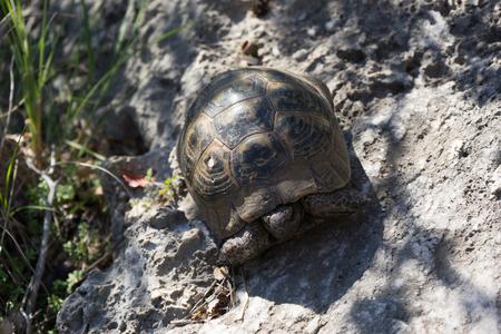 Little turtle is hiding his head