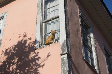 Charismatic cat sits on the windowsill