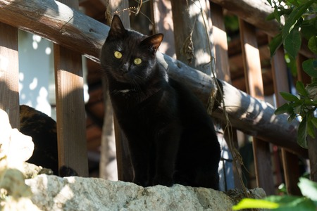 A cute black cat is looking at you