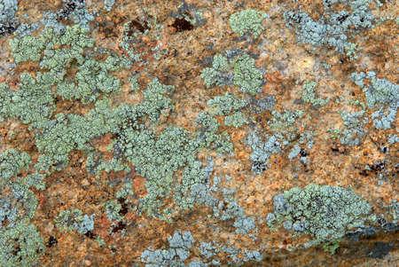 Cyan lichen on rock texture