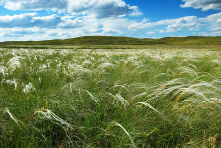 herbage: Feather-grass and clouds