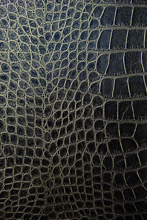 reptile: Snake skin background