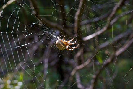 Spider on web in forest Stock Photo - 3435497