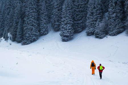 copule: Copule  backpackers in winter pine forest