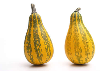 Group of small pumpkin isolated on white photo