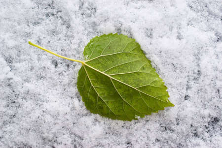 Green leaf and first snow Stock Photo - 3825138