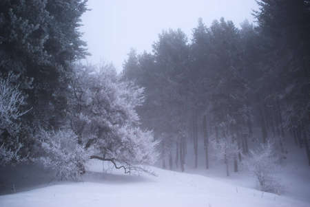 Fog in winter forest Stock Photo - 5504278