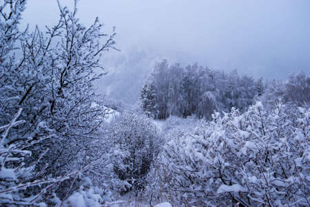 Fog in winter mountain forest Stock Photo - 5544488