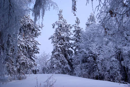 Snowfall in winter mountain forest Stock Photo - 5544483