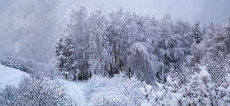 Panorama of winter mountain forest Stock Photo - 5765159