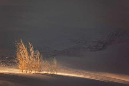 plantas del desierto: Atardecer en el desierto de arena - plantas en dunas  Foto de archivo