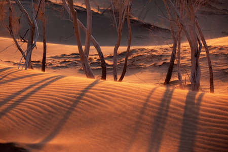 Sunset in sand desert - plants in dunes photo
