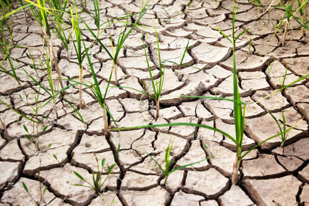 Green plants growing from cracked earth photo
