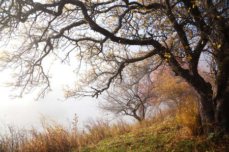 Autumn in the mountains of Tien Shan, Kazakhstan Stock Photo - 8117665