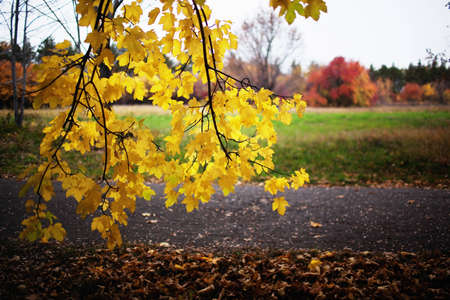 Autumn in the park on a cloudy day photo