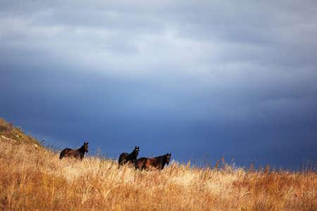 Three horses and storm sky photo