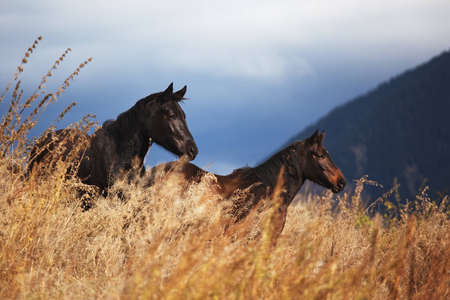 Two horses in mountain and storm sky photo